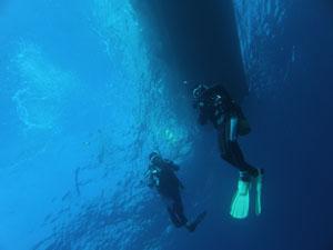 イスズミ礁 透明度いいっすよ~!