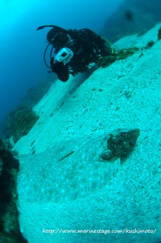 イスズミ礁 ヒラメとゲスト
