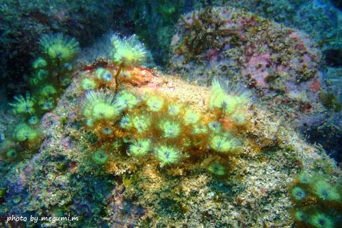 中黒礁 ケヤリ20150206