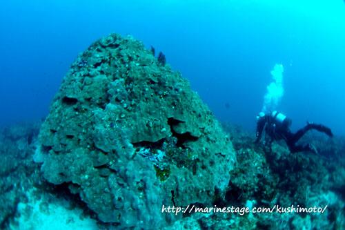 グラスワールド 百年サンゴ