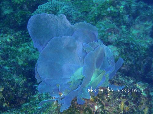 グラスワールド seaweed