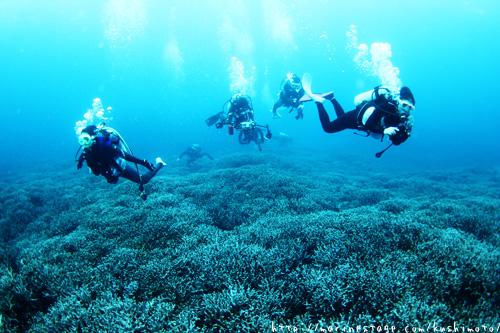 安室漁礁 コモンシコロサンゴ