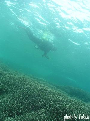 串本ダイビングパークのサンゴ