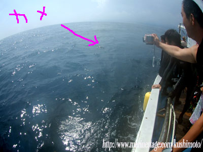水面にカメ!