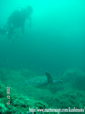 ゲストとアオウミガメの2ショット!