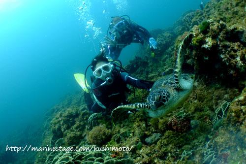 グラスワールド マーメイドとアオウミガメ