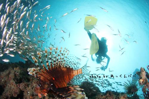 中黒礁 ハナミノカサゴとあっくん