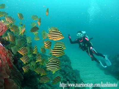 イスズミ礁 カゴカキダイ