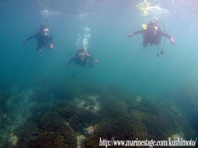 サンゴ見てきました