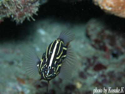 イスズミ礁 ヌノサラシ