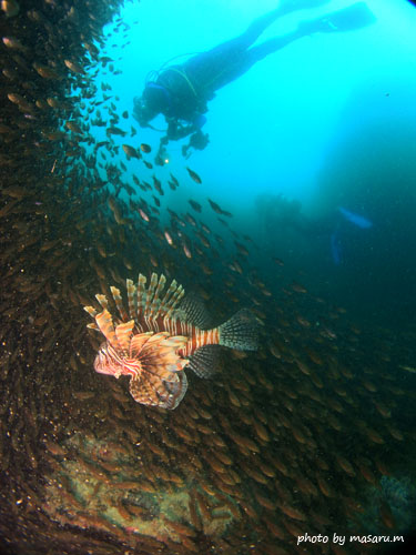 中黒礁 ハナミノカサゴとクロホシイシモチ