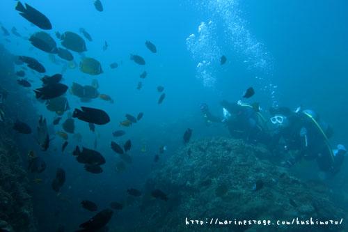 イスズミ礁 てふてふうおの群れ