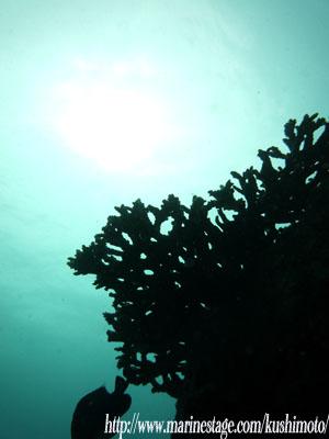 住崎 サンゴと光