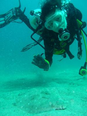 中黒礁 タイトル 『海とヒラメと私』