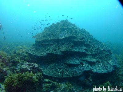 グラスワールド ハマサンゴ