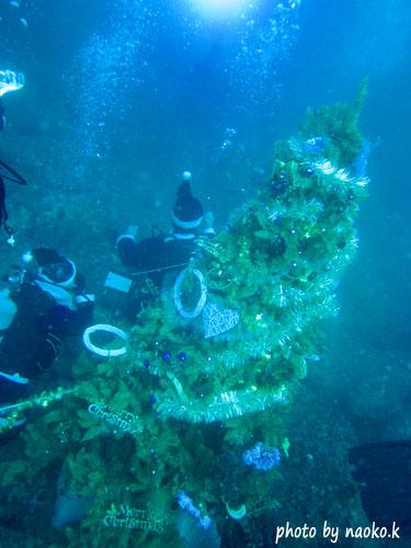 今年もクリスマスツリー設置