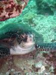グラスワールド アオウミガメに急接近2