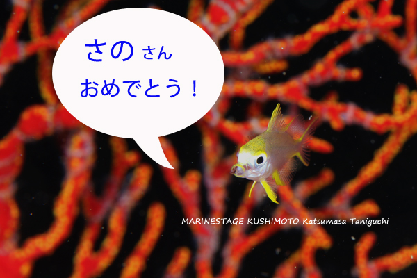 0914yamabuki3