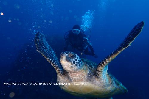 住崎 アオウミガメと20150124