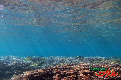 パークビーチ サンゴ