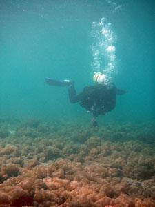 サンワ前ビーチ フクロノリの世界