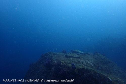 住崎 アオウミガメ20150215