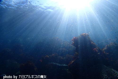 内浦ビーチ 浅場の光