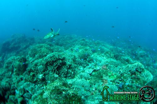 グラスワールド 串本のサンゴとカメ