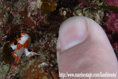 クマドリちゃんと僕の指
