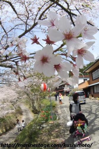 2010 桜まつり