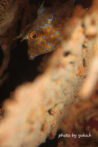 住崎 シマウミスズメとリュウキュウイソバナ