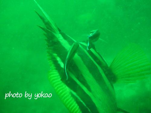 グラス 緑の海