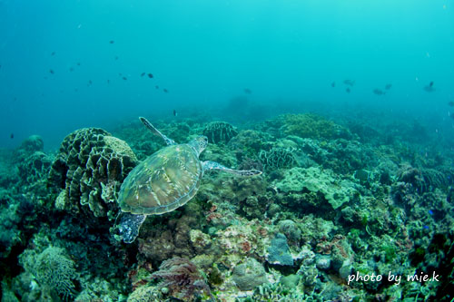 グラスワールド アオウミガメとサンゴ