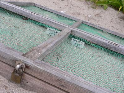 ウミガメの産卵場