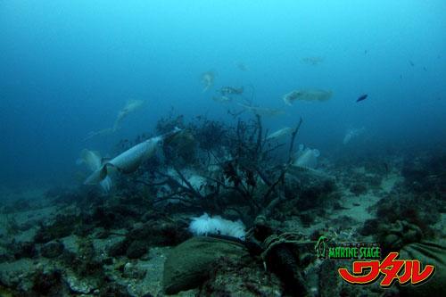 住崎東 イカ漁礁