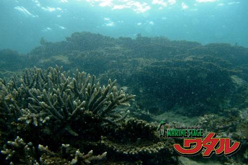 オレンジハウス前 サンゴ