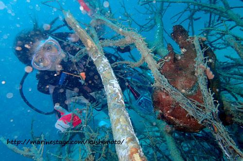 サンビラ オオモンカエルアンコウの成魚