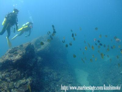 最近のイスズミ礁