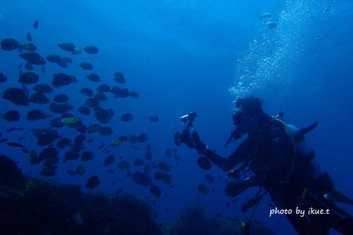 イスズミ礁 魚群を撮影中