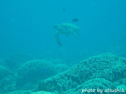 グラスワールド アオウミガメのたつじいクリーニング中