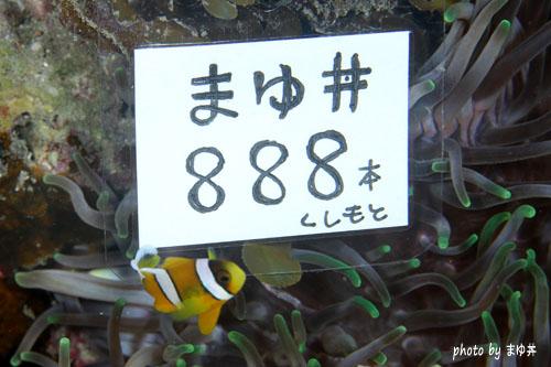 まゆ丼さん888本
