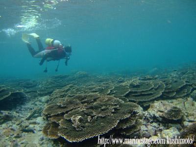 サンゴと講習生