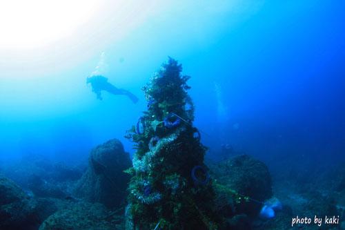 住崎 クリスマスツリー