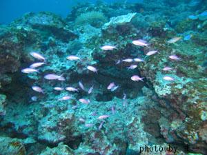 グラスワールド ハナゴイの幼魚達