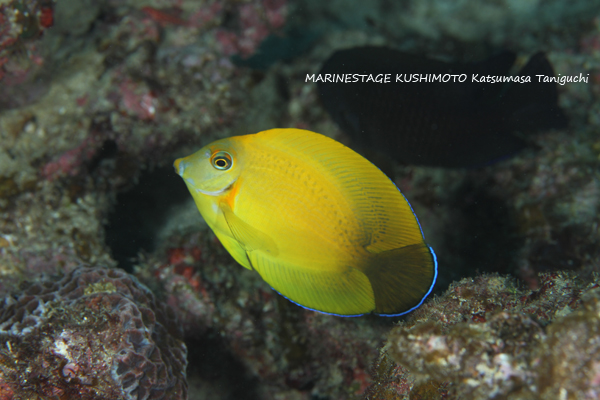 1225kuroguchiniza